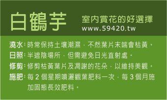 觀葉植物養護 (21).jpg