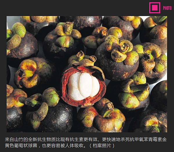 《新加坡联合早报》 科研人员从山竹分解出 对抗超级病菌抗生物质1.png