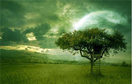 大樹理論1
