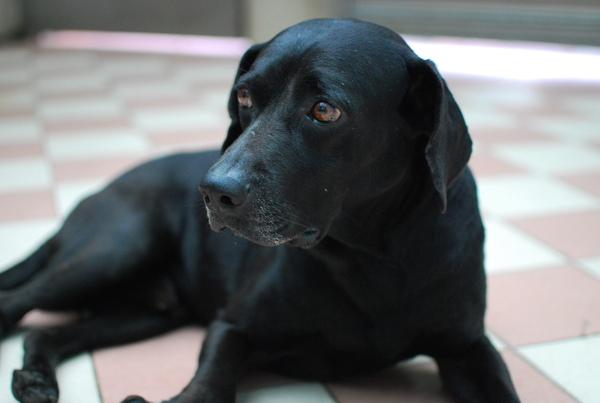 20090613黑皮生病.JPG