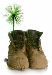 鞋+綠.jpg