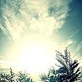天空與樹.jpg
