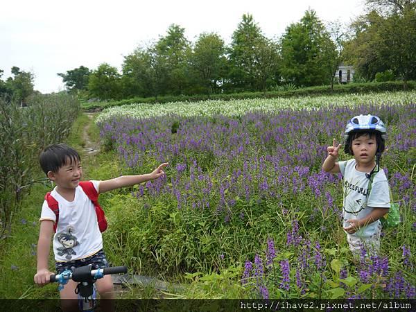 1花卉0234