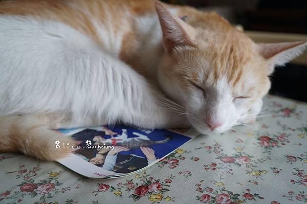 日光貓13