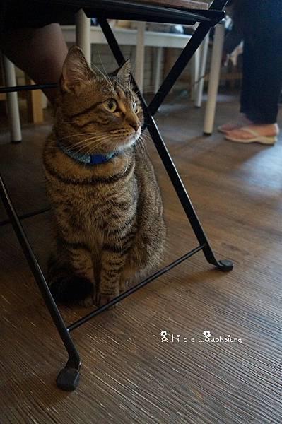 日光貓17