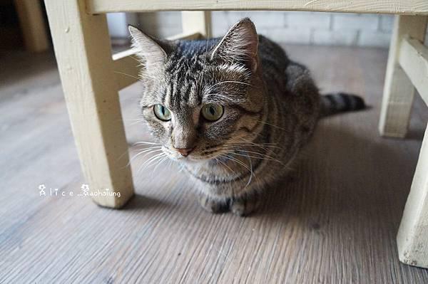 日光貓19