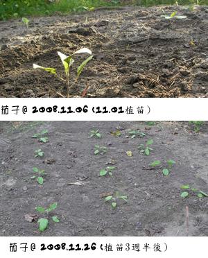 茄子1101-1126.jpg