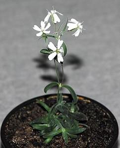 20120222考古現場_三萬年前種子開花