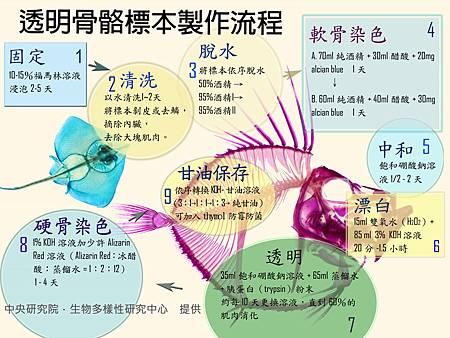 20120521塗鴉牆_製作透明魚圖解
