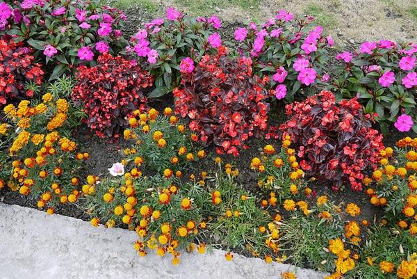 2000坪的庭園提供給懂的休閒和享受的人~山郡民宿