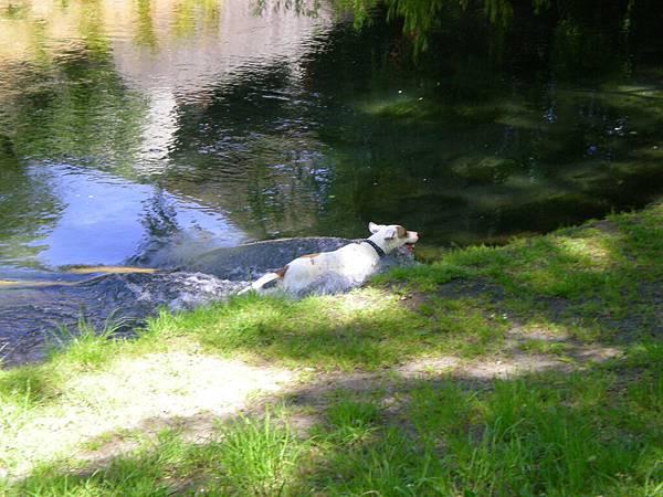 Botanic Garden-在水中奔跑的狗狗