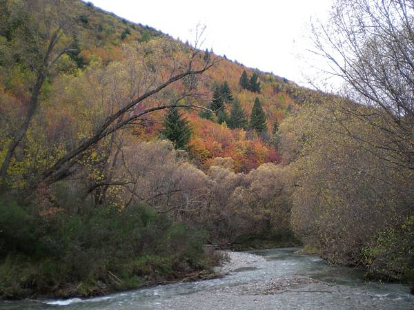 arrowtown-換上秋裝的山坡