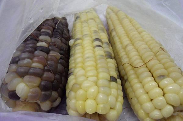 SDC18824-crop.JPG