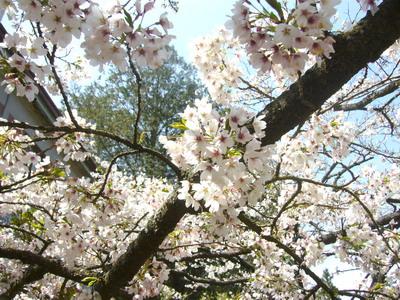 2009.03.13我愛阿里山.jpg