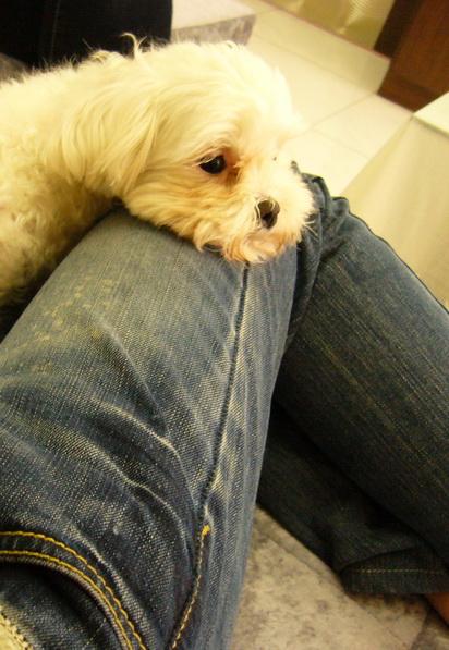 2010.03.13我只喜歡這種狗