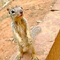 長指甲不怕人的松鼠