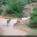 母鹿帶小鹿