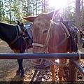 Horse ride!
