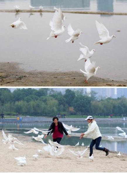 結婚放生鴿子