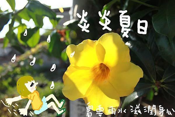 夏日小黃蘆.jpg