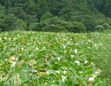 竹子湖照片02