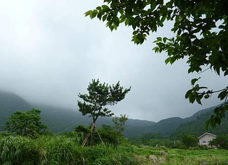 竹子湖照片04