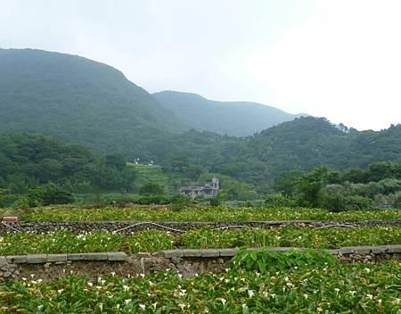 竹子湖照片05