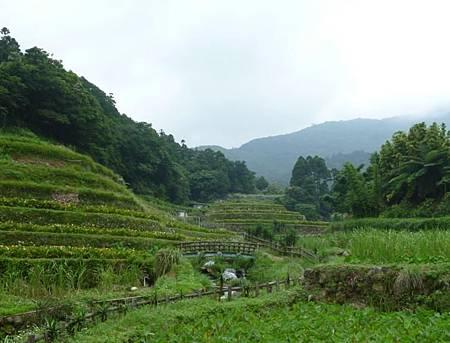 竹子湖照片06