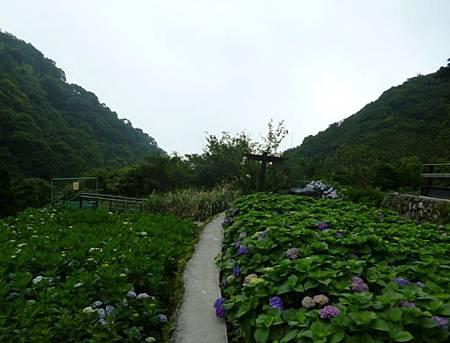 竹子湖照片08