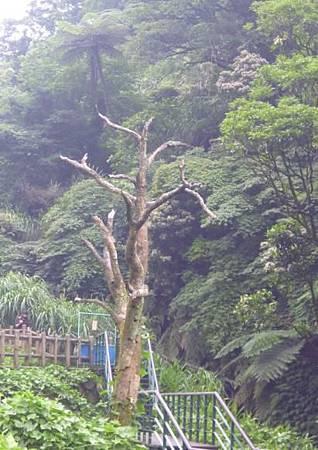 竹子湖照片09