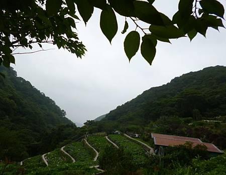 竹子湖照片10