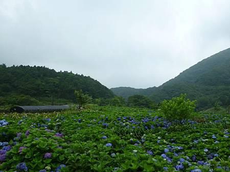 竹子湖照片16
