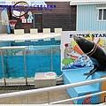 海獅玩套圓環