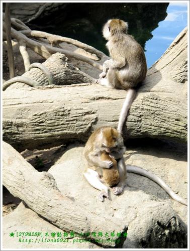 母猴緊緊摟住寶寶