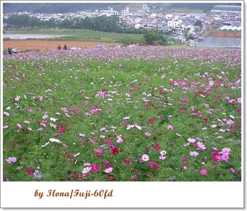 埔里花卉1+.jpg