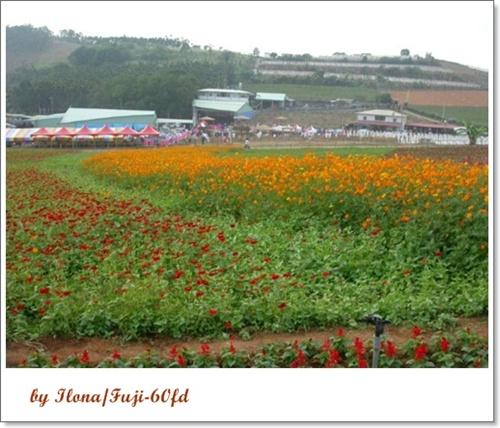 埔里花卉3.jpg