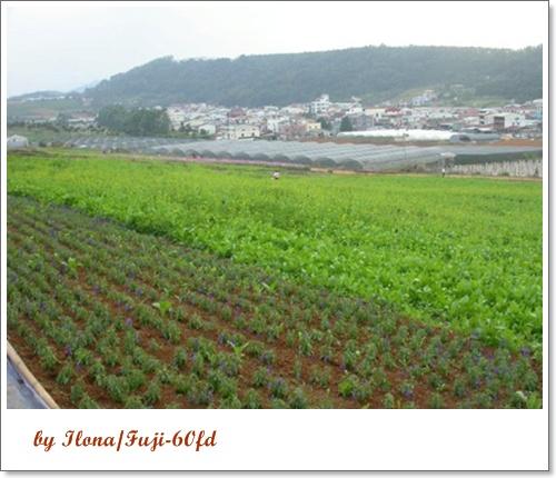 埔里花卉4.jpg