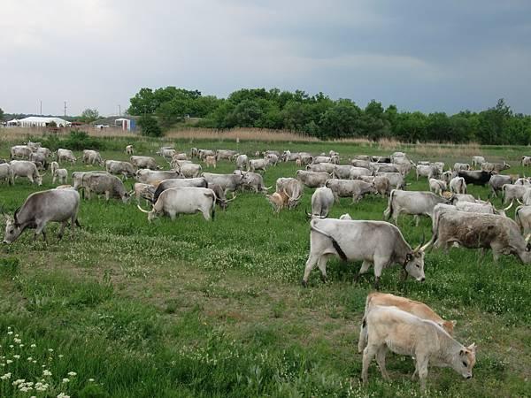 匈牙利大草原