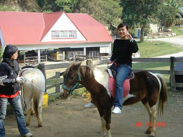 那隻馬好像很可憐~