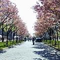 1_3_春天的大學路.JPG
