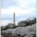 Cherry Bloosom-2-002.jpg