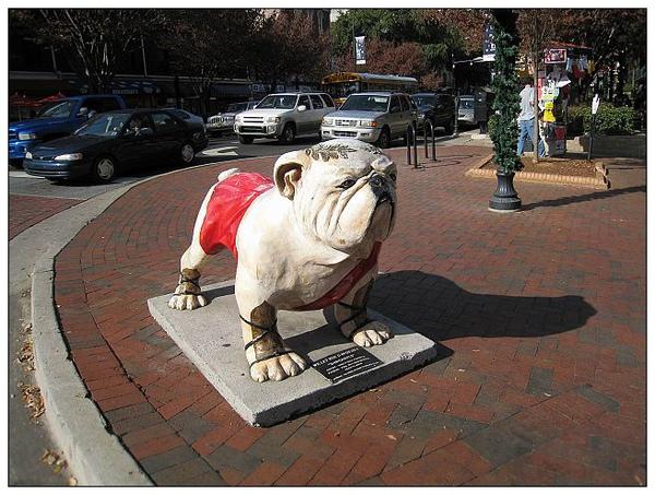 1_2_Bulldog at downtown.JPG