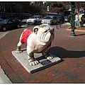1_2_Bulldog at downtown.JPG