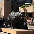 0_2_Bruins的熊.JPG