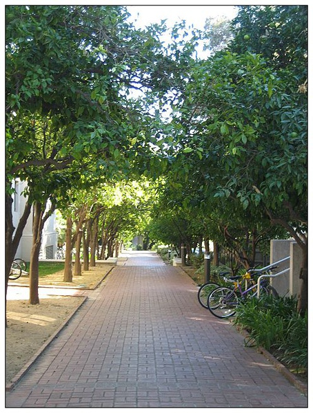 0_7_橄欖步道  The Olive walk.jpg