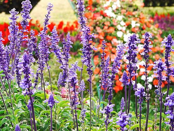 美美的花園