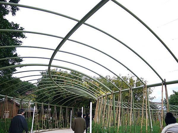 竹子架成的瓜棚步道.jpg