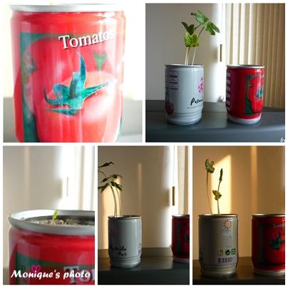 易開罐植物