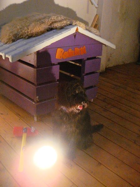 Bakku(台南店)的店犬 Bakku