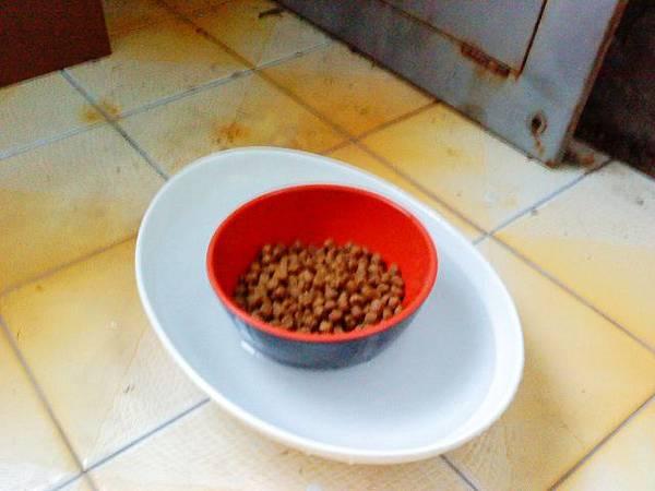旺旺的新型飼料及飲用水供應設備